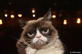 8 memes de gatos que viralizaram nas redes sociais
