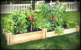 raised vegetable garden plans beginners