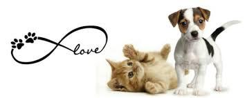Love Infinity Cute Pet Paws Vinyl Car Decal Sticker Dog Cat Macbook For Sale Online