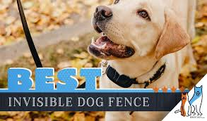 5 Best Invisible Underground Dog Fences With Our Installation Guide