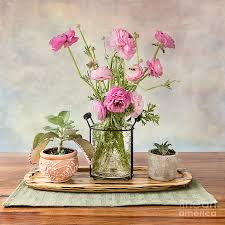 Ranunculus on display Photograph by Ava Peterson