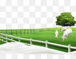 Fence Farm Png And Fence Farm Transparent Clipart Free Download Cleanpng Kisspng