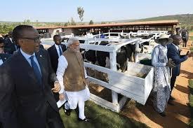 pm modi gifts 200 jersey cows to rwanda