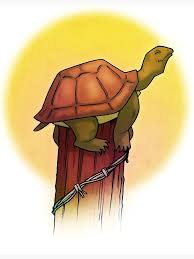 Turtle On A Fence Post Greeting Card By Wellkeptsecret Redbubble