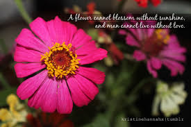 quotes about spring flowers quotes
