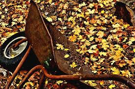 Wheelbarrow at the Cabin Photograph by Mandy Anderson