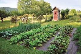 organic vegetable gardening challenges