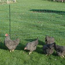 Electric Poultry Fencing For Chickens Backyard Chicken Advice