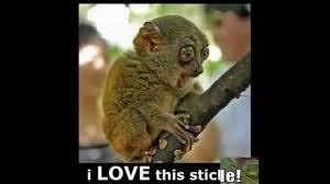 funny monkey memes you