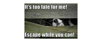 Escaping Dogs All Pets Education And Training