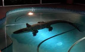 Image result for wake up swimming