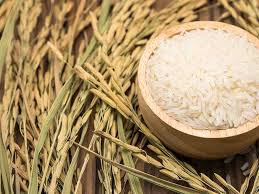 basmati rice vs brown rice which is