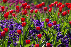 Image result for spring blooms