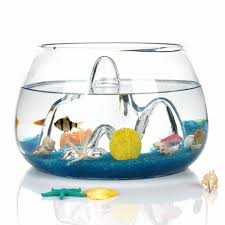 fish bowl glass plant terrarium