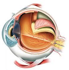 Anatomy Eye Wall Decal Wallmonkeys Com