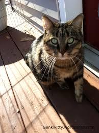 Genki Kitty S Blog Cat Fence Pet Fence Easy Pets