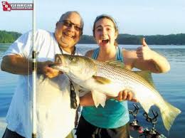 lanier stripers head for the dam