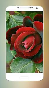 ورود الحب حمراء For Android Apk Download