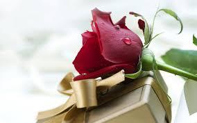 صور ورد رومانسيه رومنسيات في صور مع ورود كيوت