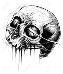 skull drawing line work vector royalty