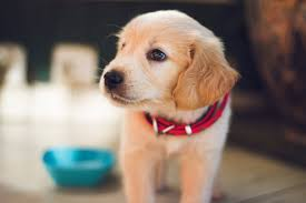how to disinfect carpet after dog
