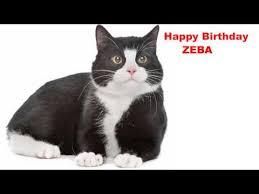 zeba cats gatos happy birthday