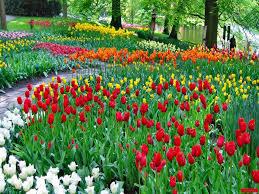 زهور ملونة خلفيات ورود وأزهار خلفيات باريس نجد