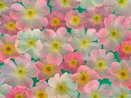 صور زهور ملونه
