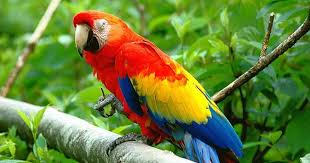is a parrot a good pet the web