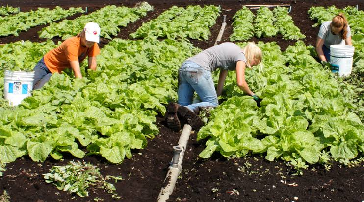 Image result for Organic Farming.""
