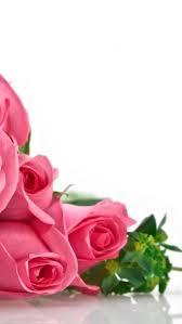 flowers red rose white rose wallpaper