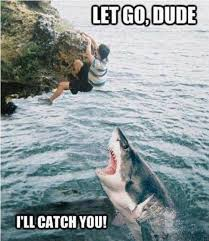 40 most funniest shark meme pictures