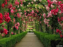 flower garden wallpapers 1600x1200 px