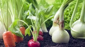 vegetable garden now edible plants