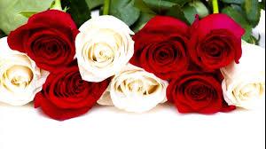 موسيقى هادئة وورود جميلة The Chainsmokers Rose Hd Youtube