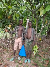 After 20 Years of Little Results, New Approaches are Needed to End Child  Labor in the Cocoa Sector – stopchildlabor