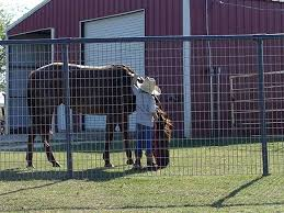 Livestock Fence Panels Galvanized Pvc Hog Cattle Sheep Horse