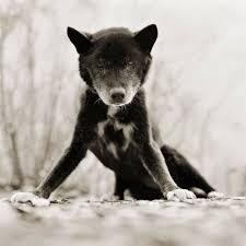 صور حزينة لحيوانات مسنة تساعد المصور في مواجهة مخاوفها من الوفيات