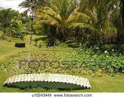 poipu kauai hi hawaii south s