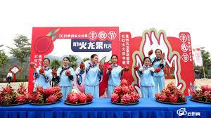 贵州火龙果丰收节一场火红的狂欢盛宴