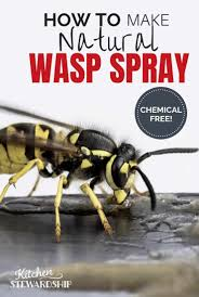 natural wasp get rid of wasp