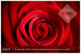 rose color meanings ftd com