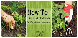 get rid of weeds in vegetable gardens
