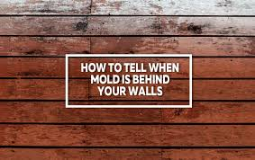 mold is behind your walls