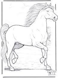 Paard 3 Kleurplaten Paarden