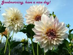 goodmorning to everybody have a nice