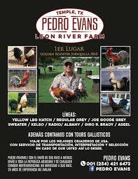 Leon River Farm de Don Pedro Evans,... - Revista Gallo Club | Facebook
