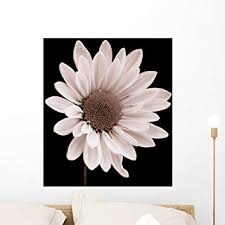 Amazon Com Wallmonkeys Daisy Wall Decal Peel And Stick Graphic Wm194140 24 In H X 24 In W Home Kitchen