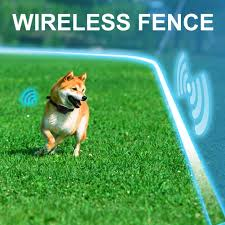 Are Wireless Dog Fences Better Than Regular Fences Shop A Dogs Life