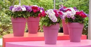 flower pots from old plastic bottles